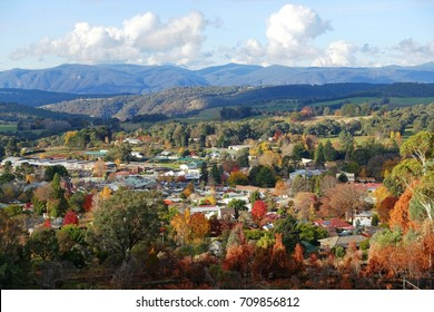 A rural village in autumn foliage color. Elevated view of small Australian town with mountains in distance. Batlow, New South Wales of Australia