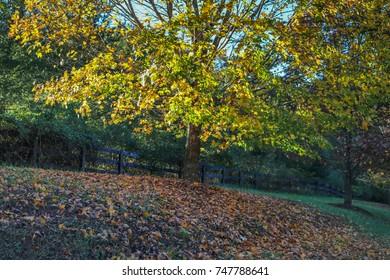 Rural Virginian tree in fall