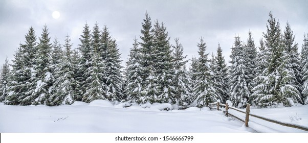 Rural winter landscape, panorama, banner - view of the snowy pine forest in the mountains
