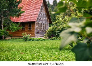Rural wooden house with a red roof in the green garden at russian countryside in summer. Russian dacha.