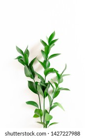 Ruscus branches on white background