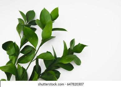 Ruscus green leaves isolated on white background