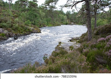 Rushing River in Ancient Caledonian Forest