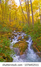 Rushing Stream Running Through the Rocks and Leaves of the Fall Forest in the Great Smoky Mountains National Park in North Carolina