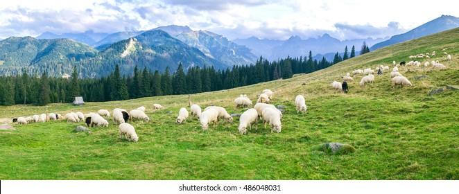 Rusinowa Polana in Tatra Mountains, Poland