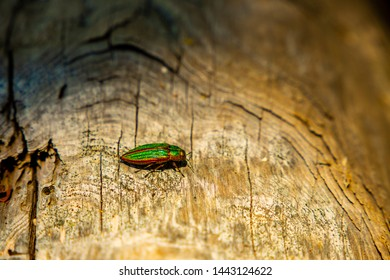 Russell Island, Canada. Green insect walking on a lug of wood, in the forest