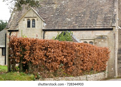 russet hornbeam hedge outside period stone country house