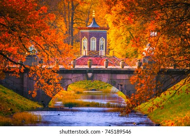 Russia. Autumn. Trees with yellow leaves. Park of Pushkin. Neighborhoods of Petersburg.