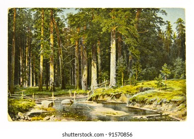 """RUSSIA -CIRCA 1912: A greeting card printed in the Russia shows painting """"Mast-Tree Grove"""" by artist Ivan Shishkin, circa 1912"""