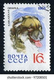 RUSSIA - CIRCA 1965: stamp printed by Russia, shows Caucasian Shepherd Dog,  circa 1965