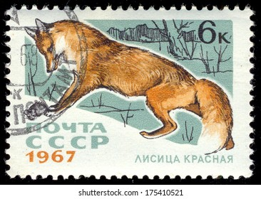 RUSSIA - CIRCA 1967: a stamp printed by USSR shows red fox, series animal, circa 1967