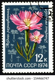 RUSSIA - CIRCA 1974: stamp printed in CCCP (soviet union) shows dianthus versicolor (carnation, pink & sweet William) from flora of USSR series, Scott 4273 A2024 12k dark blue green pink, circa 1974