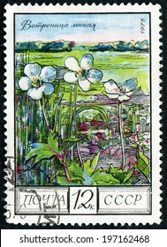 RUSSIA - CIRCA 1975: post stamp printed in USSR (CCCP, soviet union) shows image of wood anemones, steppe from regional flowers series, Scott catalog 4397 A2090 12k black multicolor, circa 1975