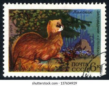 RUSSIA - circa 1975: stamp printed by Russia, shows Siberian weasel, kolonok circa 1975