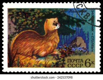 RUSSIA - CIRCA 1975: A stamp printed by Russia shows bird an Siberian Marten  from the series Berezina River and Stolby wildlife rezervations, 50th anniversary., circa 1975