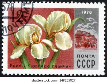 RUSSIA - CIRCA 1978: stamp printed in USSR (CCCP, soviet union) shows image of Ilich anniversary iris and Lenin central museum from Moscow flowers series, Scott 4653 A2192 12k red white, circa 1978