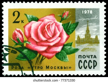 RUSSIA - CIRCA 1978: a stamp printed in Russia shows  Rose  ' Moscov morning ', series  Moscov  Flowers, circa 1978