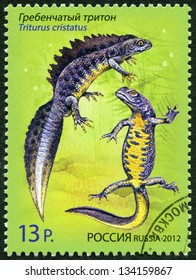 "RUSSIA - CIRCA 2012: A stamp printed in Russia shows Crested Newt, series ""Fauna. Newts"", circa 2012"