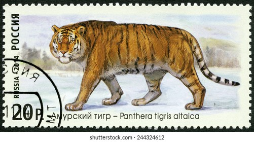 "RUSSIA - CIRCA 2014: A stamp printed in Russia shows Siberian tiger, series ""The Fauna Of Russia. Wild cats"", circa 2014"