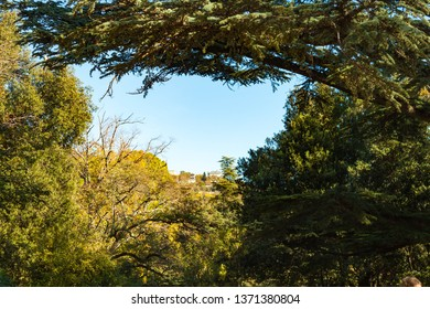 Russia, Crimea, Alupka 03 November 2018: incredibly beautiful landscape view of the park of Vorontsov Palace with coniferous and deciduous trees, woody shrubs, Cypress.