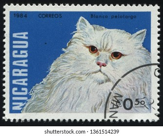 RUSSIA KALININGRAD, 25 MARCH 2019: stamp printed by Nicaragua shows Domestic cat, circa 1984