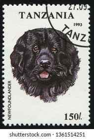 RUSSIA KALININGRAD, 25 MARCH 2019: stamp printed by Tanzania shows Pedigree dog, circa 1993