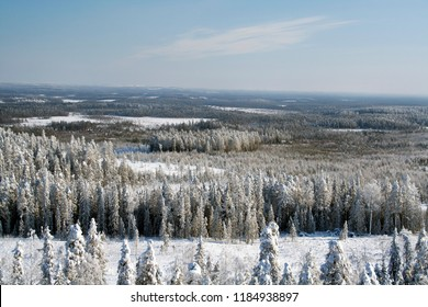 Russia. Karelia. Winter in Kostamus. Forest in snow. Panorama