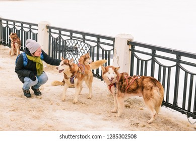 Russia, Kostroma region, city Kostroma - February 21, 2015: The young girl in irons a dog. Pack of dogs in the winter. Huskies