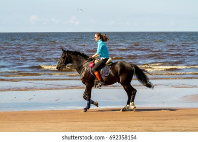 Russia. Leningrad Region-08.08.2017: A  woman on horseback riding along the Gulf of Finland