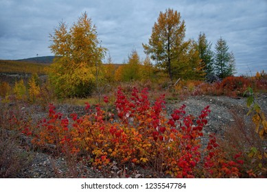 Russia. Magadan region. Autumn taiga on permafrost.