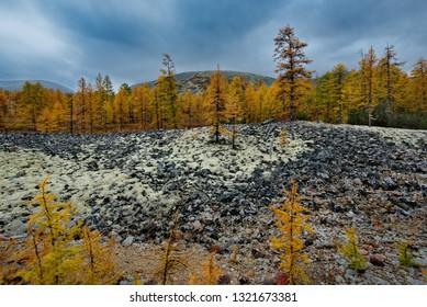 Russia. Magadan region. Autumn taiga on permafrost.