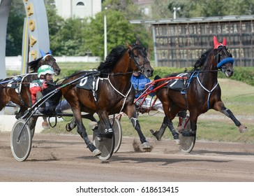 Russia, Moscow  -10 July 2016. Harness horse racing. Two horses trotter breed in move on hippodrome.