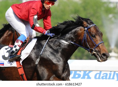 Russia, Moscow  -10 July 2016. Portrait of the rider and  thoroughbred race horse on speed