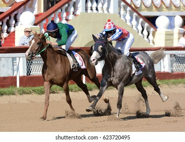 Russia, Moscow – 11 September 2016. Two purebred Arabian racehorses on finish