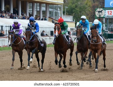 Russia, Moscow – 11 September 2016. Thoroughbred horses in racing