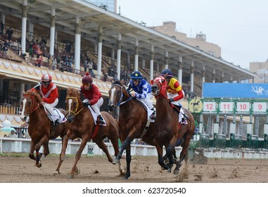 Russia, Moscow – 11 September 2016. Four Thoroughbred horses in racing