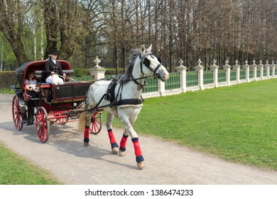 RUSSIA MOSCOW -24 April 2019 Coachman in cloak sits in coach with white horse and hold reins in spring park