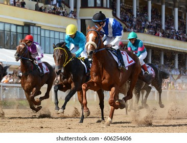 Russia, Moscow  - 8 May 2016. Horseracing. Thoroughbred racehorses in motion on hippodrome.
