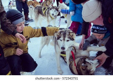 Russia, Nizhniy Tagil February 12 - children riding on a dog sled. The Siberia's first festival devoted to dogs of northern riding breeds. Sportsman musher runs dogsled on snowy track.