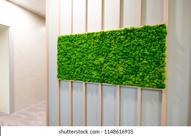 Russia, Novosibirsk - November 29, 2017: decorative moss for interior decoration. office style, interior design elements