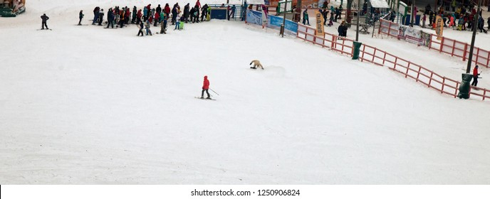 Russia, Perm - January 3, 2017: Queue of skiers on ski lift at ski resort. Skiing, slalom as russian youth craze