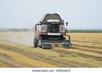Russia, Poltavskaya village - September 27, 2015: Rice harvesting by the combine. Autumn harvesting on fields.