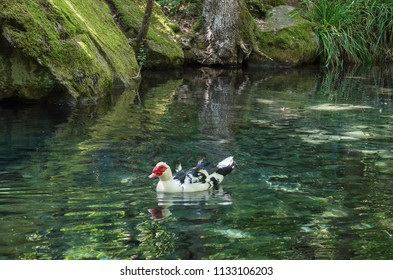 Russia, the Republic of Crimea, the city of Alupka. 06.06.2018: Pond with ducks in the Vorontsov park