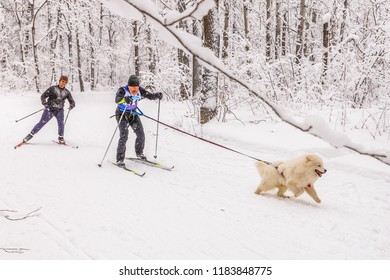 Russia, Samara, January 2017: Skijoring with a dog. Samara. Christmas Race.