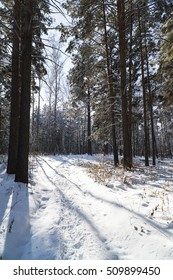 Russia, Siberia, Novosibirsk region, snowy forest in clear weather