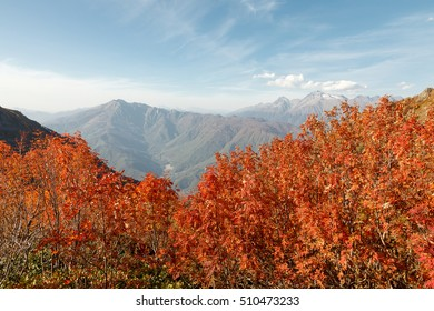 Russia, Sochi, In the mountains of the Caucasus come autumn. Vibrant fall colors of alpine meadows and foothills.
