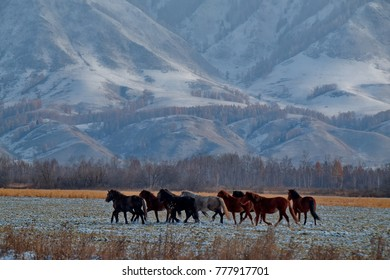 Russia. The South Of Western Siberia, Autumn in the Altai Mountains