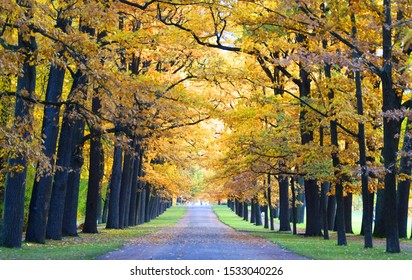 RUSSIA, ST. PETERSBURG, PUSHKIN - OCTOBER 08, 2019: A sunny October morning and a walk in Catherine's Park in Tsarskoye Selo, a shady alley