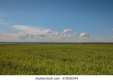 Russia, time lapse. Rapid movement of clouds in the summer over wheat fields in the endless steppes of the Don.