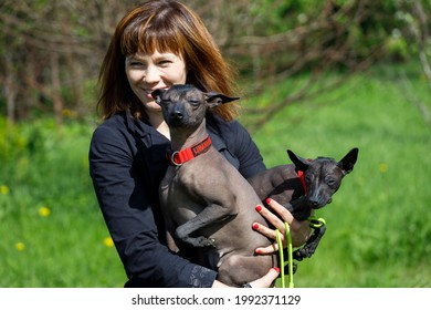 Russia. Vyborg 05.05.2021 A woman in the arms of a dog breed naked Mexican. High quality photo